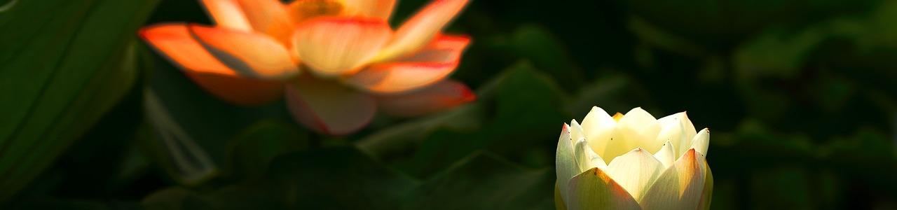 slider image 385